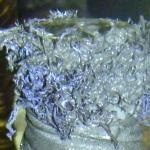 Az üveg szája